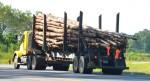 Geplante Holzfeuerung für E.ON-Kraftwerk bedroht Wälder