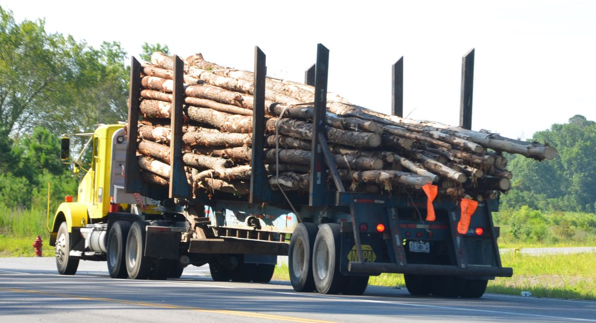 Kahlschlag für Biomasse