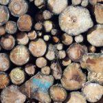 Offener NGO-Brief an FAO der UNO: Wälder nicht verheizen!