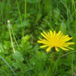Bioökonomie-Strategie der Bundesregierung: Ökologie als Worthülse?