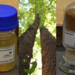 Bioökonomie: Noch mehr Hunger nach Waldprodukten