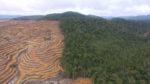Nachhaltiges Palmöl - Chance für den Wald oder Greenwashing für Konzerne?