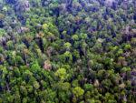 Wälder unter Druck: Warum die Bioökonomie unsere Ökosysteme bedroht