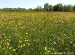 Biodiversität in Gefahr